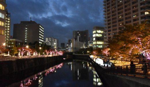 目黒川に冬の桜が咲きました!