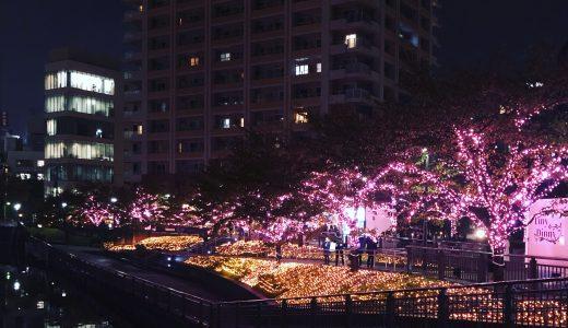 今年も冬の桜が咲きました